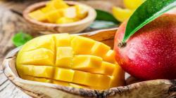 """El Tercer Congreso Internacional del Mango """"calienta motores"""" convirtiéndose en un referente a nivel mundial para la industria del mango"""
