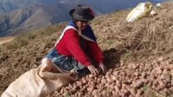 """""""Ella Alimenta al Mundo"""" proporcionan recursos y capacitaciones a agricultoras para aumentar rendimiento de sus cultivos y sus ingresos"""
