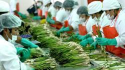 Empleo en el sector agroexportador se redujo 1.5% en el primer semestre de 2020