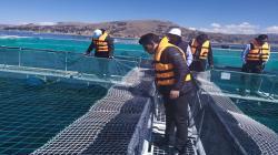 En dos meses se planteará una nueva ley de promoción e incentivo para la acuicultura