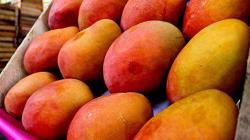 Enero: exportaciones peruanas de mango llegaron a US$ 70.8 millones