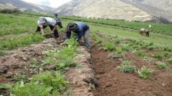 ENTORNO MACROECONOMICO Y AGRICULTURA FAMILIAR EN EL MARCO DE LA CRISIS