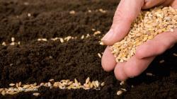 Equinom apalanca US$ 10 millones para acelerar el desarrollo de semillas inteligentes
