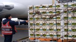 Espárragos y mangos frescos representan el 65.5% del volumen total exportado vía aérea por Perú entre enero y mayo del 2021