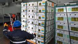Espárragos y mangos representaron el 73% de las exportaciones vía aéra del Callao en 2019