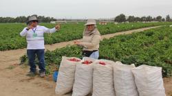 Establecen medidas para promover formalización laboral del sector agrario