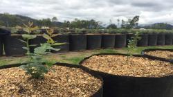 Establecen requisitos fitosanitarios para la importación de plantas de arándano cuyo origen y lugar de producción es Viveros Fall Creek México