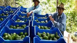 Estado debe involucrar a la agricultura familiar en la agroexportación