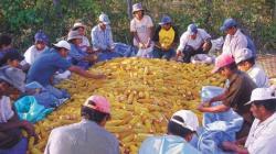 Estudio europeo reconoce el beneficio de las organizaciones de productores para los agricultores