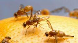 Europa hace más estricta la regulación fitosanitaria para exportar frutas y vegetales a su territorio