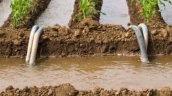 Evitar la impunidad por el mal uso del agua