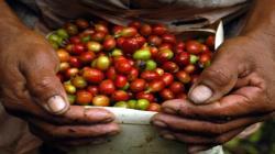 Exceso de lluvias en Colombia podría agravar la escasez mundial de café