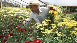 Existen más de 4 mil hectáreas de flores de corte y plantas ornamentales en nuestro país