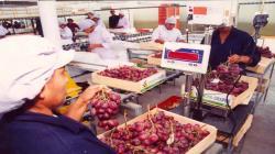 Exportación agroindustrial es el único sector que registra crecimiento en la primera mitad del año