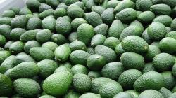 Exportaciones agropecuarias de Perú a Chile crecieron 10.3% en 2020