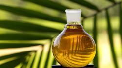 Exportaciones de aceite de palma en bruto sumaron US$ 10.4 millones en el primer bimestre