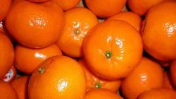 Exportaciones de mandarinas llegaron a valores de US$ 33.5 millones durante los ocho primeros meses del año