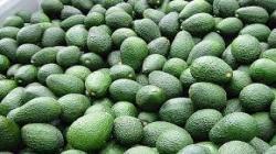 Exportaciones de palta Hass por parte de Agrícola Pampa Baja crecerían 66.6% en campaña 2021