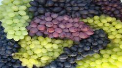 Exportaciones de uva de mesa de Chile alcanzarían las 66.393.109 cajas en la campaña 2020/2021