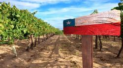 Exportaciones frutícolas de Chile a China alcanzan un valor histórico de US$ 1.581 millones en primer semestre de 2021