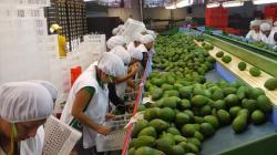 Exportaciones peruanas de fruta a Argentina crecieron en valor 188% en 2020