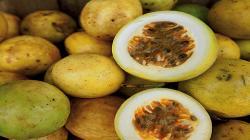 Exportaciones peruanas de maracuyá sumaron US$ 35.6 millones durante enero-julio, registrando un alza de 27%