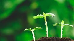 """Facultad de Agronomía de la UNALM realizará curso de actualización profesional sobre """"Fisiología Vegetal para Cultivos de Exportación"""""""