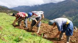 FAE-Agro: Cofide realizará hoy una nueva subasta por S/ 45 millones
