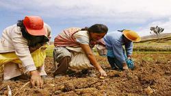 FAE-Agro: una nueva oportunidad para el desarrollo agrícola del país