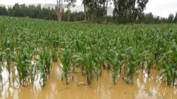 FAO: Agricultura perdió US$ 280.000 millones en entre el 2008 y 2018 por desastres naturales