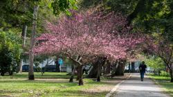 FAO nombra al distrito de Lince como «Ciudad arbórea del mundo 2020»