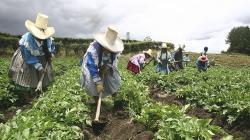 FAO: Sistemas agroalimentarios del mundo emplean en la actualidad a más de mil millones de personas