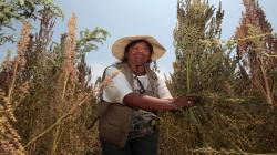 FIDA apoyará el desarrollo de tres proyectos en el agro el próximo año
