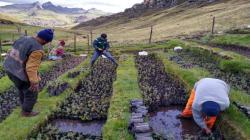 Fortalecen acciones de protección de cultivos, animales y suelos ante lluvias y heladas