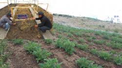FORTALECER EL USO DE SEMILLA DE CALIDAD EN LA AGRICULTURA FAMILIAR