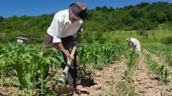Frepap propone reactivar economía de agricultores mediante la compra directa de sus productos