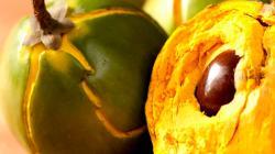 Fundo Key reconvertirá áreas para enfocarse en lúcuma y quiere crecer en maracuyá y kion