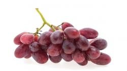 Fundo Los Paltos proyecta exportar 100 mil cajas de uva de mesa sin semillas ecológicas