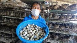 Gobierno apoyará formalización de productores de huevos de codorniz