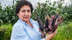 Gobierno de Chile premiará a investigadora peruana por innovación en maíz morado