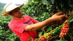 Gobierno impulsa servicios y crédito para jóvenes rurales emprendedores