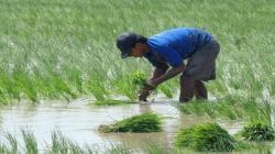 Gobierno Regional de San Martín destinará S/ 9 millones en beneficio de agricultores arroceros