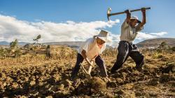 Gobiernos regionales y locales cuentan con un presupuesto de S/ 2.000 millones para inversión de Procompite en agro