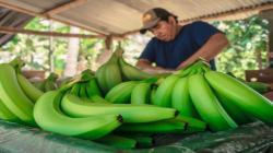 Gobiernos regionales y locales podrán cofinanciar Planes de Negocio de Agroideas