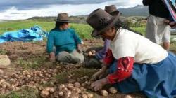 Gremios agrarios solicitan bono producto agrario no reembolsable por S/ 500 millones