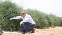 Grupo Avibiol a la vanguardia en el control del cadmio en los suelos agrícolas del país