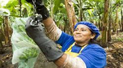 Habilitan una mayor flexibilidad en la toma de decisiones en el uso de la Prima de Comercio Justo Fairtrade