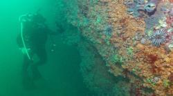 """""""Hemos producido suficiente plástico para causar efectos permanentes en el mar"""""""