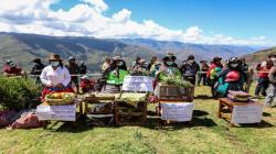 Huancavelica: más de 140 mil personas mejorarán calidad de vida con emprendimientos agrícolas impulsados en 51 tambos