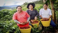 IICA lanza foro virtual para promover el empoderamiento de las mujeres rurales